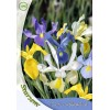 Iris Hollandica Mix - 10 Bulbi
